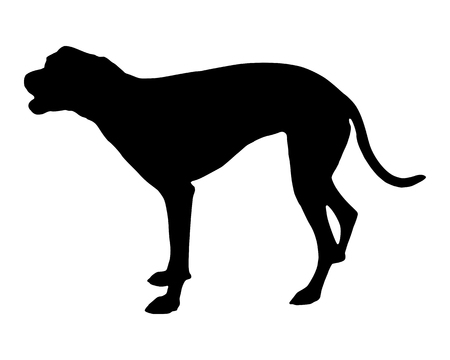 barking: Cane che abbaia