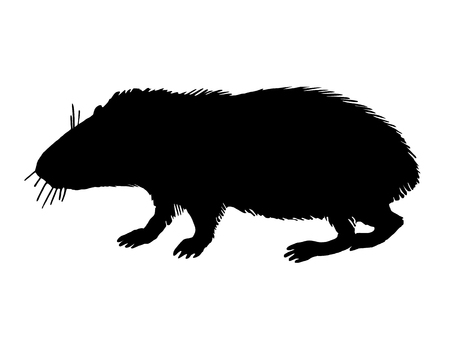 guinea pig: The black silhouette of a guinea pig on white