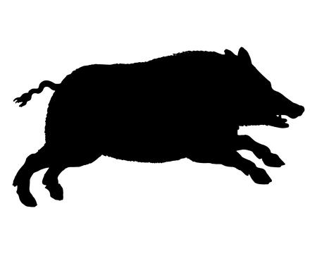 sowing: The black silhouette of a running wild pig on white Illustration