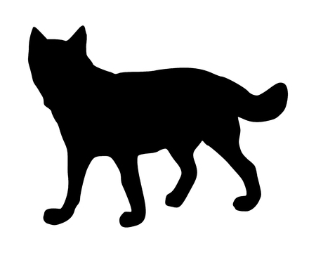 snooping: The black silhouette of a wolf on white