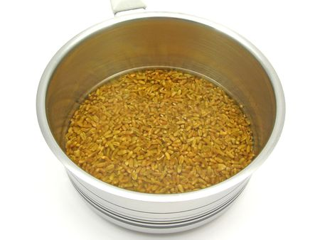 watered: Unripe spelt grain watered in clear and cold water