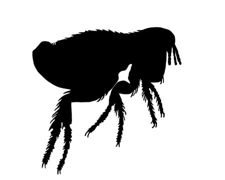 the bloodsucker: The black silhouette of a dog flea
