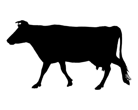 cow: The black silhouette of a cow on white Illustration