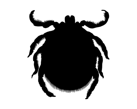 sucking: The black silhouette of a tick on white Illustration