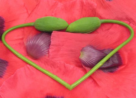 Heart out of  poppy buds with petals as background