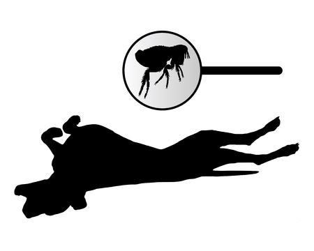 dog bite: Cane � di graffiare le spalle a causa di un morso pulci