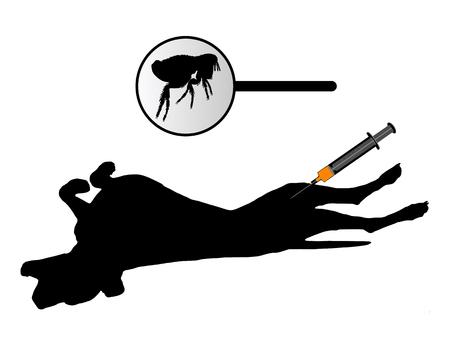 inoculation: Dog gets an inoculation against fleas on white