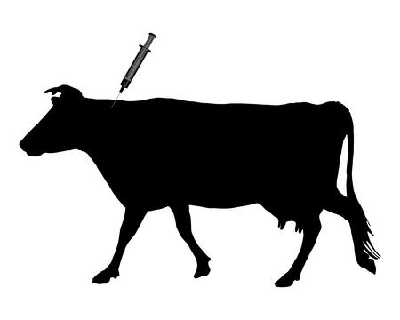 vacunaci�n: Una vaca se inoculaci�n porque la enfermedad de la lengua azul