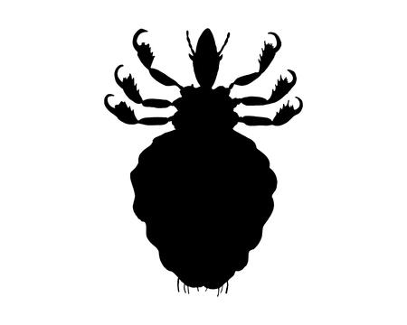 piojos: La silueta de un negro piojo humano