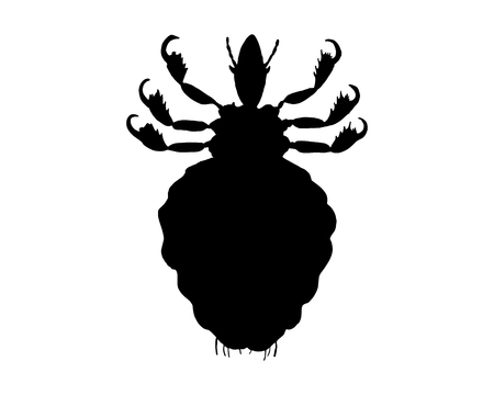 head louse: The black silhouette of a human louse