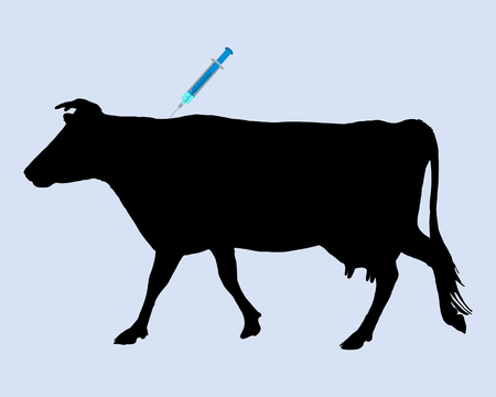 inoculation: Cow gets an inoculation against blue tongue disease Illustration