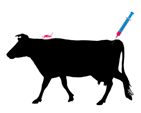 anopheles: Cow gets an immunization against a disease of mosquito bites