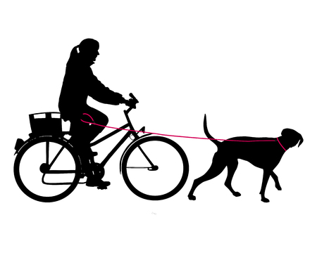 pointer dog: Woman on bicycle with dog on leash