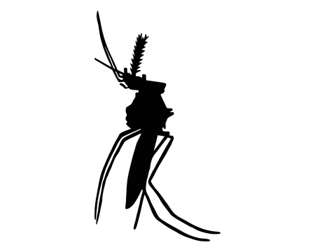 gnat: The black silhouette of a mosquito on white Illustration