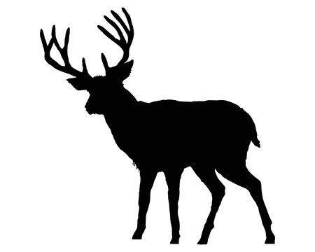 antlers silhouette: The black silhouette of a deer on white