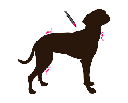 Dog gets an immunization against a disease of mosquito bites Vector