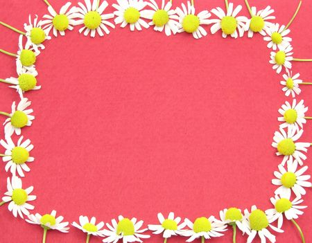 matricaria: Camomile blooms formed as square on red felt