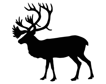 antlers silhouette: The black silhouette of a caribou on white