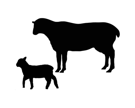 ungulates: The black silhouettes of a sheep and a lamb on white Illustration