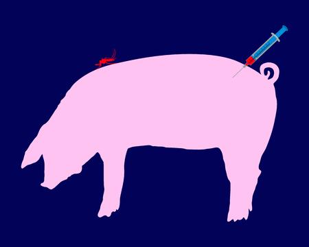 flu immunization: Pig gets an immunization against diseases of midge bites
