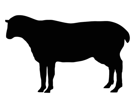 black sheep: The black silhouette of a sheep on white Illustration