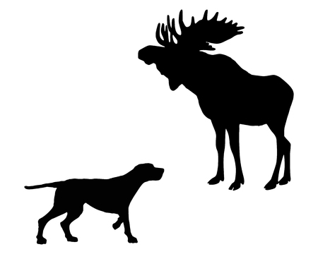 Two animals, setter and moose meet face to face