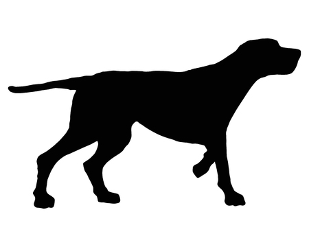 hounds: The black silhouette of a setter on white