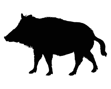 sus: The black silhouette of a boar on white Illustration