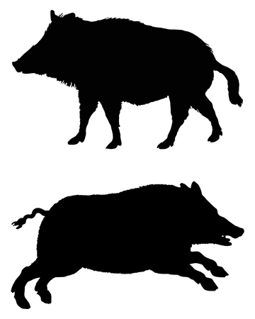sow: The black silhouettes of two boars on white Illustration