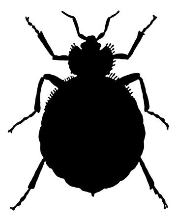 The black silhouette of a bedbug as illustration Illustration