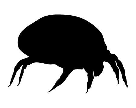 The illustration of a house dust mite Illusztráció