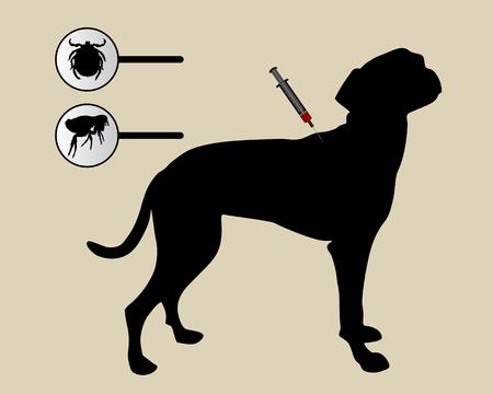 inoculation: Dog gets an inoculation against fleas and ticks on white