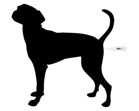 digital thermometer: Illustrazione come prendere la temperatura di un cane Vettoriali