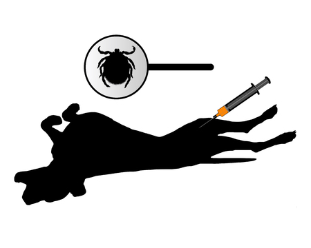 jab: Dog gets an inoculation against ticks on white Illustration