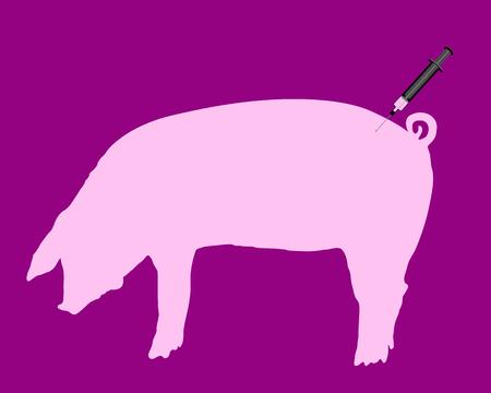 flu immunization: Swine gets an inoculation because of swine flu Illustration