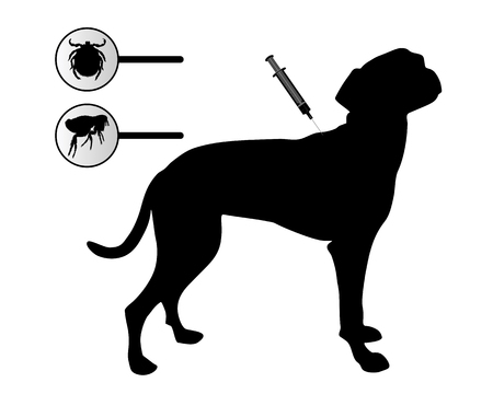 fleas: Dog gets an inoculation against fleas and ticks on white
