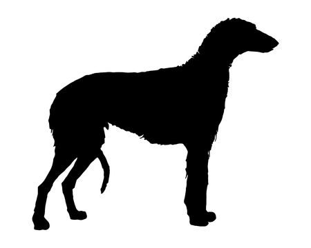 The black silhouette of a scottish Deerhound Stock Vector - 5734501