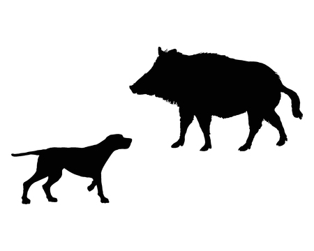 Two animals, setter and boar meet face to face  Vector