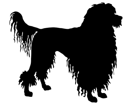 longhaired: The black silhouette of a Portuguese Water Dog Illustration