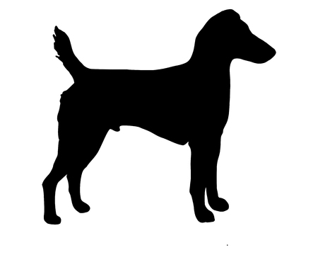 westfalen: The black silhouette of a Westfalen Terrier
