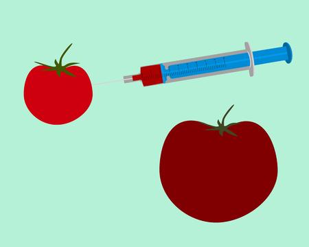 genetic engineering: Illustration of genetic engineering of a tomato on green background Illustration
