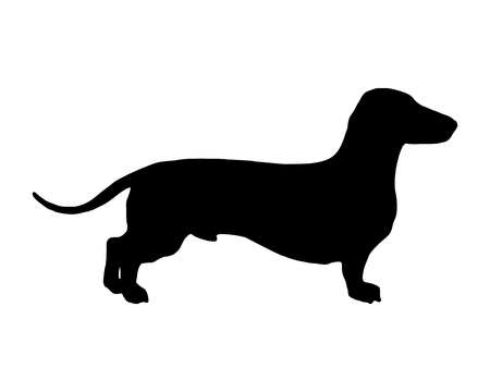 dog silhouette: The black silhouette of a shortlegged Badger Dog
