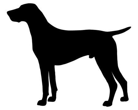pointers: The black silhouette of a German Shorthaired Pointer Illustration
