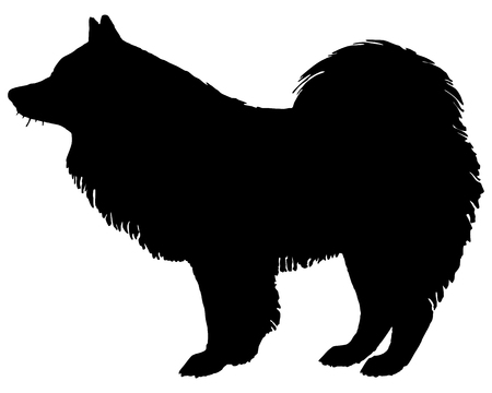 dog sled: The black silhouette of a Samoyed Dog
