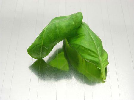 underlay: Dos hojas de albahaca en gris, reflejando la estera  Foto de archivo