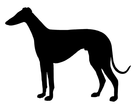 La silhouette nera di un Sighthound shorthaired  Archivio Fotografico - 5850481
