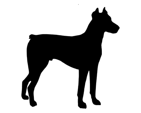 pinscher: The black silhouette of a Doberman Pinscher