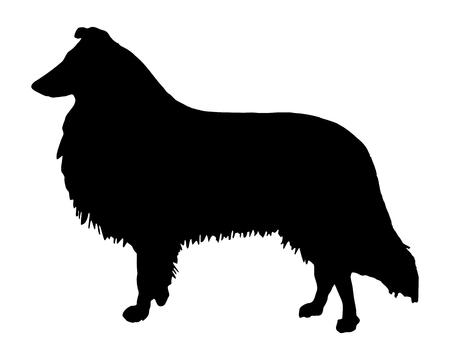 La silhouette nera di un Collie longhaired Archivio Fotografico - 5934100