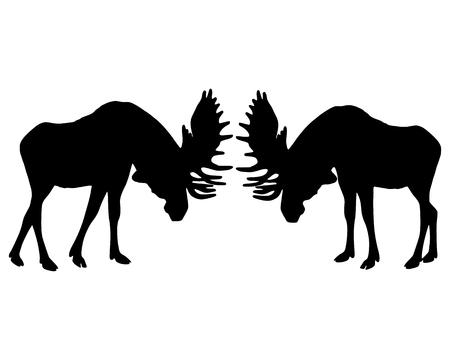 antlers: Isolated illustration of rutting behavior of moose Illustration
