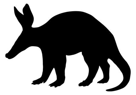 aardvark: Detailed and isolated illustration of the mammal aardvark
